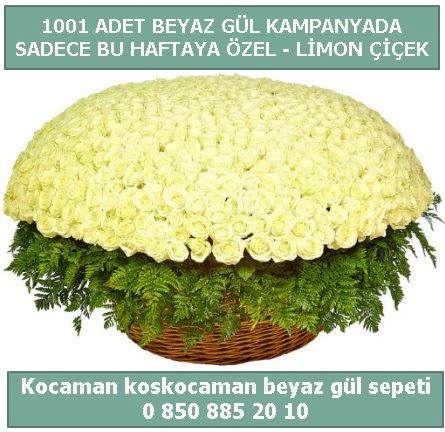 1001 adet beyaz gül sepeti özel kampanyada  Bitlis çiçek gönderme sitemiz güvenlidir