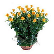 Bitlis cicekciler , cicek siparisi  10 adet sari gül tanzim cam yada mika vazoda çiçek