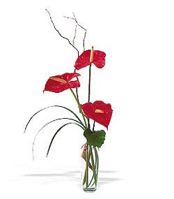 Bitlis çiçek siparişi sitesi  cam yada mika Vazoda 3 adet  antoryum