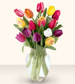 Bitlis çiçekçiler  13 adet cam yada mika vazoda laleler