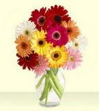 Bitlis çiçek yolla , çiçek gönder , çiçekçi   cam yada mika vazoda 15 özel gerbera