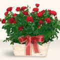 Bitlis İnternetten çiçek siparişi  11 adet kirmizi gül sepette