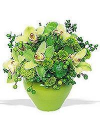 cam yada mika vazoda 5 adet orkide   Bitlis online çiçekçi , çiçek siparişi