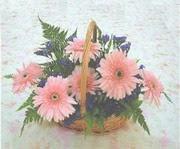 gerbera çiçeklerinde sepet   Bitlis çiçek yolla