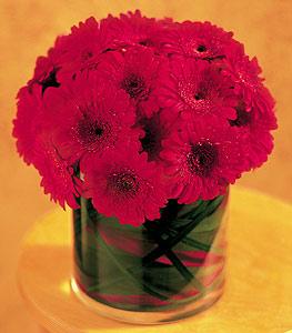 Bitlis ucuz çiçek gönder  23 adet gerbera çiçegi sade ve sik cam içerisinde