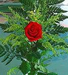 1 adet kirmizi gül buketi   Bitlis çiçek siparişi vermek