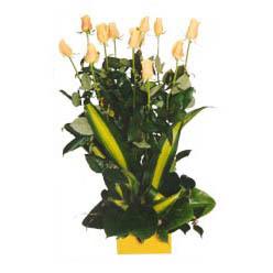 12 adet beyaz gül aranjmani  Bitlis kaliteli taze ve ucuz çiçekler