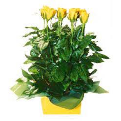 11 adet sari gül aranjmani  Bitlis online çiçekçi , çiçek siparişi