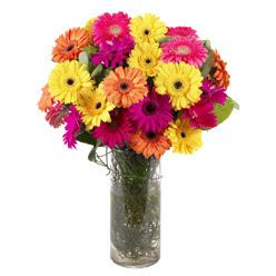KARISIK GERBERALARDAN CAM VAZO TANZIMI  Bitlis güvenli kaliteli hızlı çiçek
