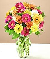 Bitlis çiçek online çiçek siparişi  17 adet karisik gerbera