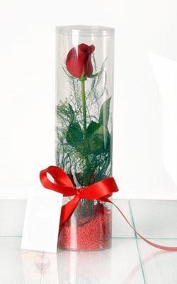 Bitlis çiçek yolla  Silindir vazoda tek kirmizi gül