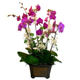 Bitlis cicek , cicekci  4 adet orkide çiçegi