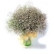 Bitlis çiçek mağazası , çiçekçi adresleri  cam yada mika vazo içerisinde cipsofilya demeti