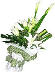 Bitlis güvenli kaliteli hızlı çiçek  3 dal kazablanka çiçegi ve yesillikler