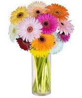 Bitlis internetten çiçek siparişi  Farkli renklerde 15 adet gerbera çiçegi