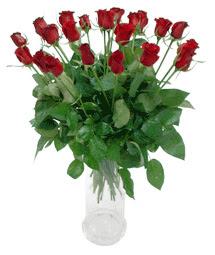 Bitlis çiçekçi telefonları  11 adet kimizi gülün ihtisami cam yada mika vazo modeli