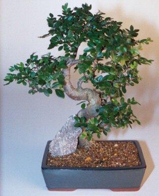 Bitlis çiçek gönderme sitemiz güvenlidir  ithal bonsai saksi çiçegi  Bitlis çiçek siparişi sitesi