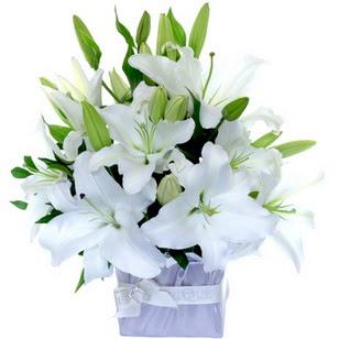 Bitlis çiçek yolla  2 dal cazablanca vazo çiçeği