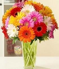 Bitlis çiçek servisi , çiçekçi adresleri  15 adet gerbera çiçek vazosu