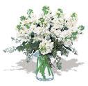 Bitlis cicek , cicekci  Vazoda beyaz güzel sebboylar