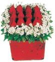 Bitlis çiçek gönderme  Kare cam yada mika içinde kirmizi güller - anneler günü seçimi özel çiçek