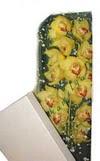 Bitlis çiçek gönderme  Kutu içerisine dal cymbidium orkide