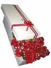 Bitlis çiçekçi telefonları  11 adet 1.kalite magnum güller