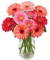vazo içerisinde 13 adet gerbera çiçeği  Bitlis çiçek siparişi sitesi