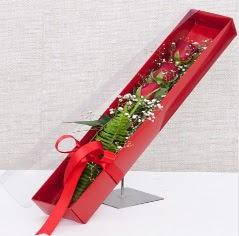 Kutu içerisinde 3 adet kırmızı gül  Bitlis online çiçek gönderme sipariş