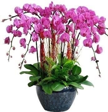 9 dallı mor orkide  Bitlis 14 şubat sevgililer günü çiçek