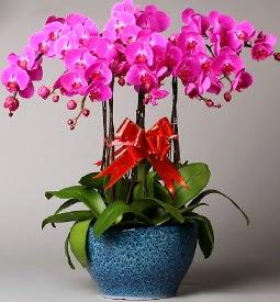 7 dallı mor orkide  Bitlis çiçek online çiçek siparişi