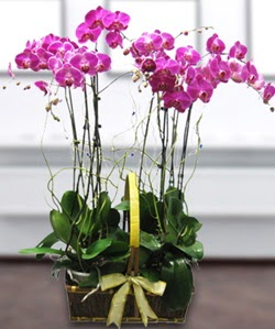 4 dallı mor orkide  Bitlis güvenli kaliteli hızlı çiçek