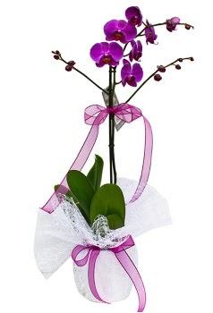Tek dallı mor orkide  Bitlis çiçekçi telefonları