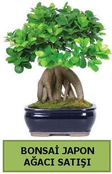 Bonsai japon ağacı satışı  Bitlis çiçek satışı