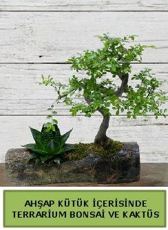 Ahşap kütük bonsai kaktüs teraryum  Bitlis internetten çiçek siparişi