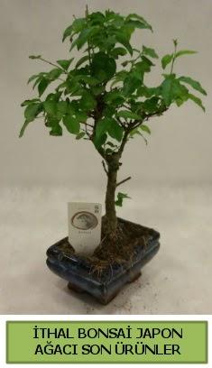 İthal bonsai japon ağacı bitkisi  Bitlis hediye sevgilime hediye çiçek