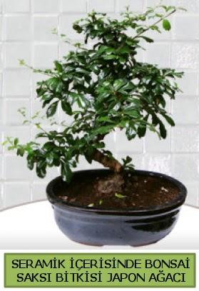 Seramik vazoda bonsai japon ağacı bitkisi  Bitlis çiçek siparişi sitesi