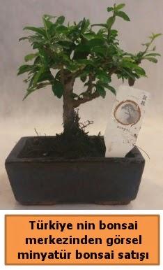 Japon ağacı bonsai satışı ithal görsel  Bitlis çiçek yolla