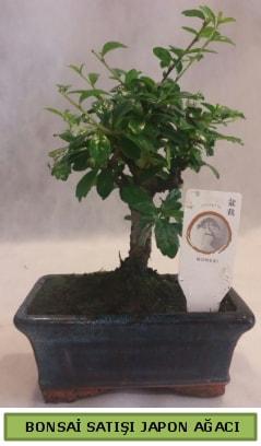 Minyatür bonsai ağacı satışı  Bitlis çiçek gönderme