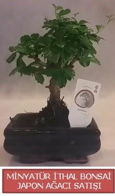 Küçük görsel bonsai japon ağacı bitkisi  Bitlis çiçek , çiçekçi , çiçekçilik