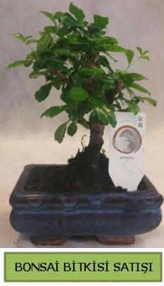 Bonsai ithal görsel minyatür japon ağacı  Bitlis ucuz çiçek gönder