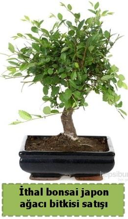İthal bonsai saksı çiçeği Japon ağacı satışı  Bitlis İnternetten çiçek siparişi