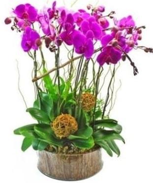 Ahşap kütükte lila mor orkide 8 li  Bitlis internetten çiçek satışı