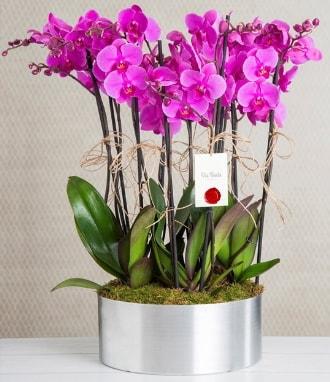 11 dallı mor orkide metal vazoda  Bitlis çiçek gönderme sitemiz güvenlidir