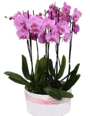 Beyaz seramik içerisinde 7 dallı mor orkide  Bitlis çiçekçi telefonları