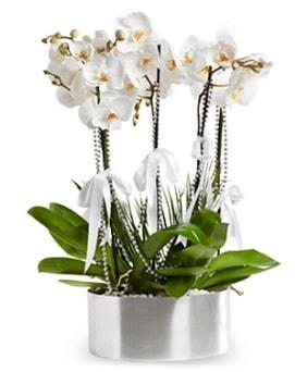 Beş dallı metal saksıda beyaz orkide  Bitlis çiçek yolla