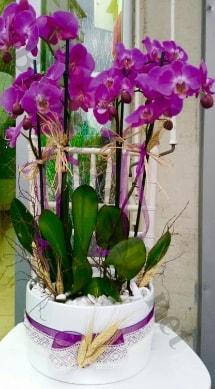 Seramik vazoda 4 dallı mor lila orkide  Bitlis online çiçek gönderme sipariş
