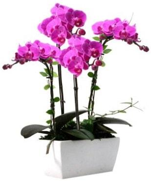 Seramik vazo içerisinde 4 dallı mor orkide  Bitlis çiçek satışı
