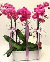 Beyaz seramik içerisinde 4 dallı orkide  Bitlis ucuz çiçek gönder