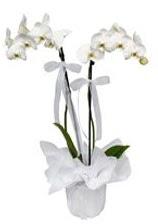 2 dallı beyaz orkide  Bitlis güvenli kaliteli hızlı çiçek